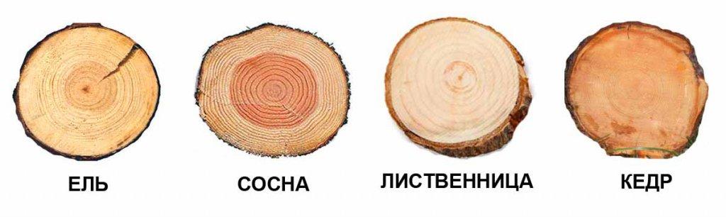 хвойные породы дерева