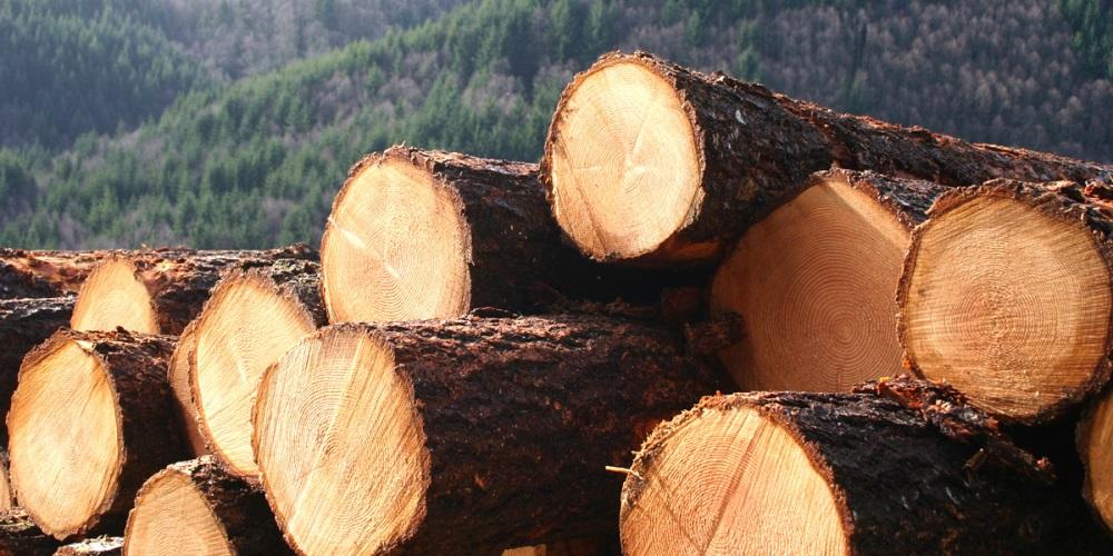 Виды пиломатериалов и древесины в строительстве