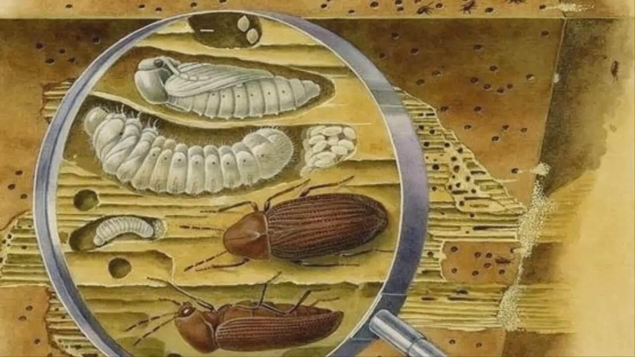насекомые в срубе